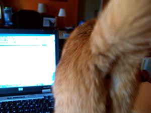 Cat Screen Saver2