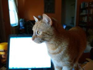 Cat Screen Saver1