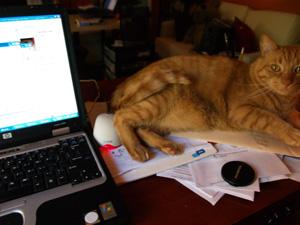 Cat Screen Saver3